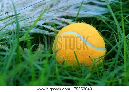 Tennis Ball On Green Grass