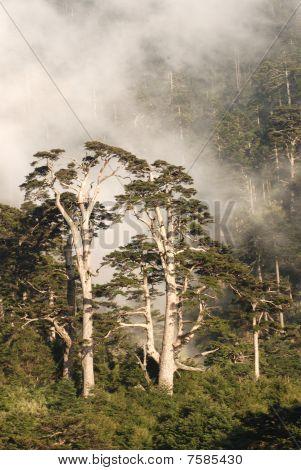 misty forest background