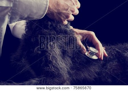 Retro Image Of Veterinarian Examines Puppy Using Stethoscope