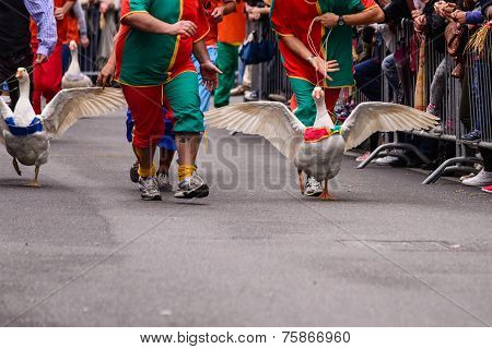 Geese Race