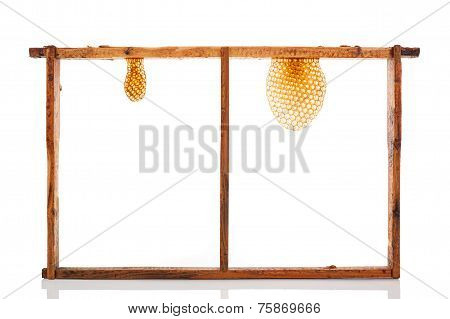 Honeycomb Isolated.