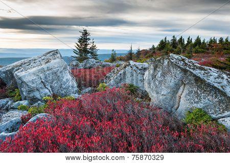 Bear Rocks Preserve Dolly Sods Wilderness Area West Virginia