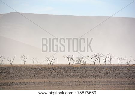 The Namib-Naukluft National Park