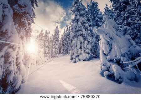 Fantastic winter landscape in the sunny beams. Dramatic wintry scene. Carpathian, Ukraine, Europe. Beauty world. Retro filter. Instagram toning effect. Happy New Year!