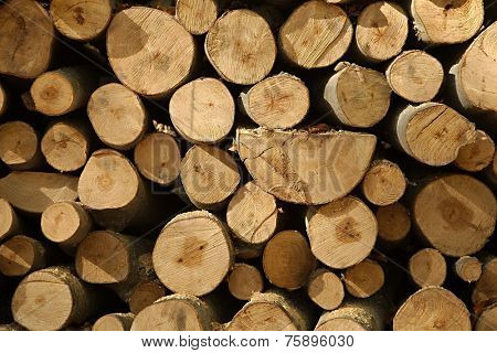 Pile of logs cut for firewood