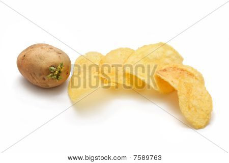 Germinating Potato And Chips