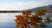 stock photo of tree snake  - Small tree next to the Snake River taking on autumn colors - JPG