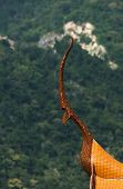 pic of apex  - Old gable apex architecture of Thailand abstract - JPG