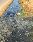 pic of sewage  - sediment sewage released on based household in rural areas - JPG