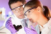stock photo of microscope slide  - Attractive young scientist and her post doctoral supervisor looking at the microscope slide in the forensic laboratory - JPG