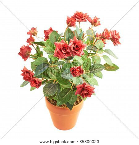 Artificial rose flower in a pot isolated