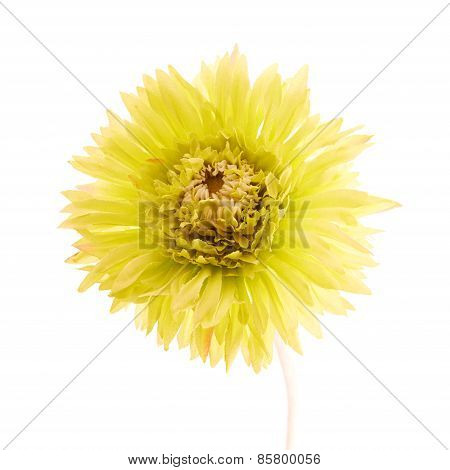 Artificial yellow flower isolated