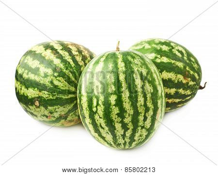 Green watermelon fruit composition isolated