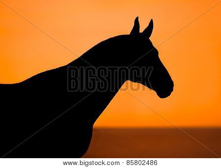 Black Horse Silhouette On An Orange Background