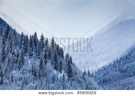 Mountain Valley with coniferous trees covered by snow