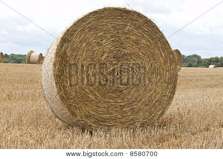 Round Bale Of Hay Closeup