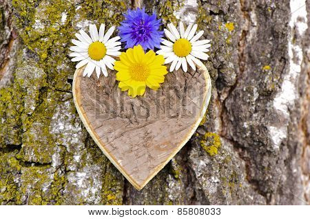 carved wooden heart at tree bark