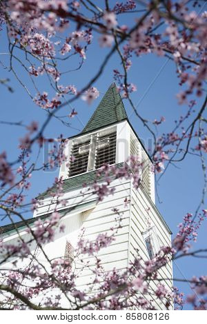 Church Steeple With Blossoms