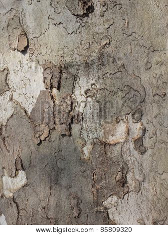Detail of tree bark in nature.
