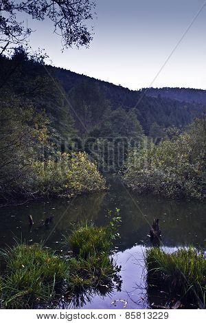 Landscape : wild bog of See d'Urbes, Vosges, France