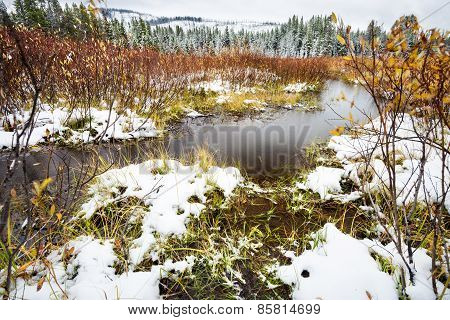 Snowy September Day In Yellowstone National Park