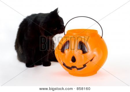 Curious Black Kitten and Candy Pumpkin.