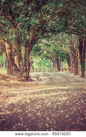Path under the tree-tunnel with pink flowers on the ground in vintage atmosphere