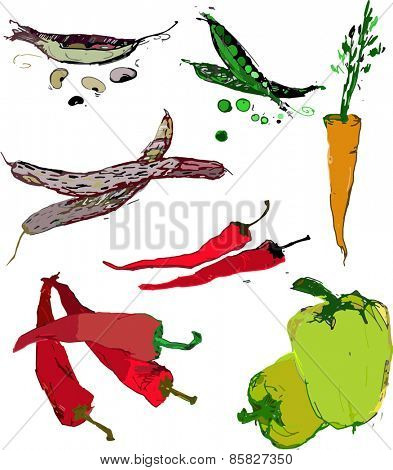 Paprika,carrot and beans vector illustration in color