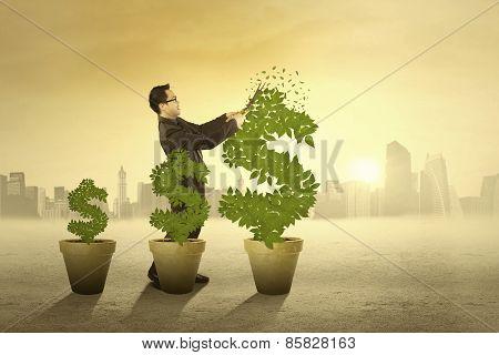 Entrepreneur Manage The Money Tree