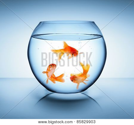goldfish in recycle concept