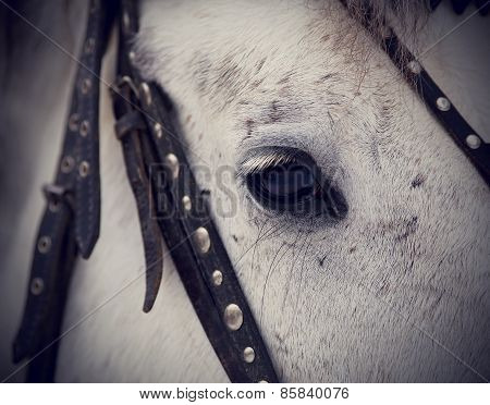Eye Of A Grey Horse.