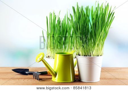 Fresh green grass in small metal buckets, watering can and garden tools on wooden table, on bright background