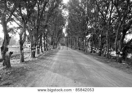 A road in the woods