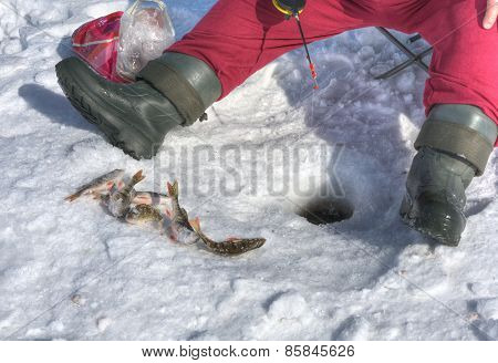 Ice Fishing For Perch