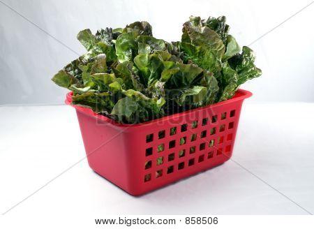 Red leaf lettuce in a basket