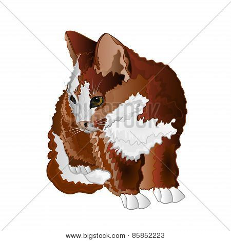 Small Kitten Color Vector