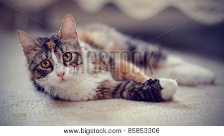Multi-colored Striped Cat.