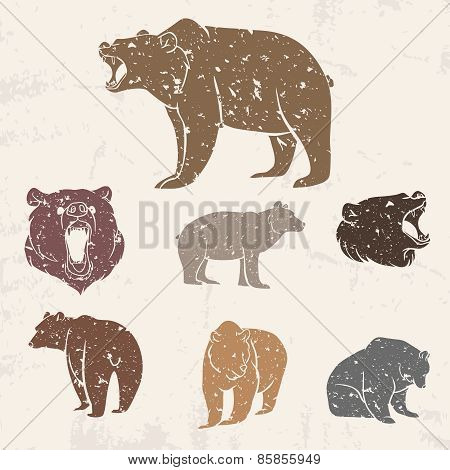 Set of different bears