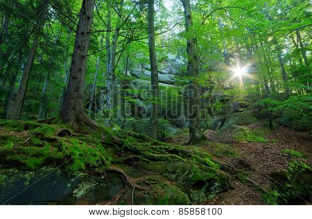 Forest landscape. Springtime. Sunlight in the branches of trees