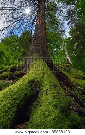 Spring landscape. Moss on the tree. Beauty in nature. Fairy Tale Forest