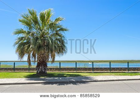 Palm Along The Street And Railways, Faro, Portugal