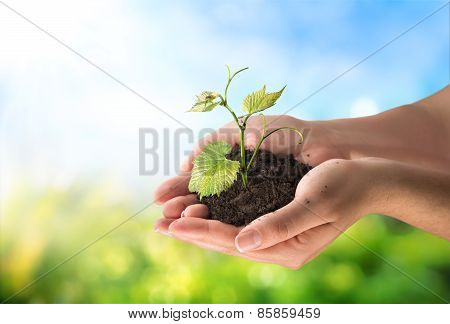 agriculture concept, little plant in the hands
