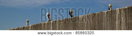 Pelican Heads