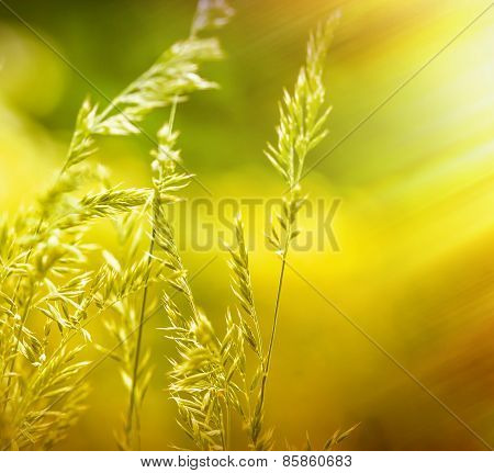 Spring grass illuminated by rays of setting sun
