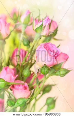 Flower Roses Background