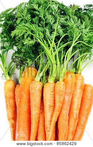 Carrots With Leaves