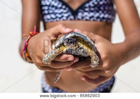 Young Girl Playing With Turtle In Hands Against The Background Of Tropical Sandy Beach Near the Sea