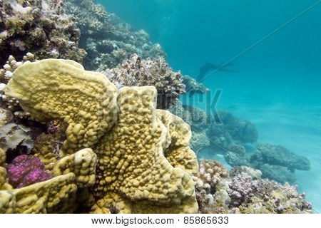 Colorful Coral Reef At The Bottom Of Tropical Sea, Underwater