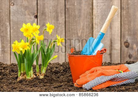 Daffodils And Garden Tools In Front Of An Old Garden House