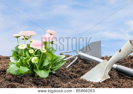 Daisies With Shovel And Rake In Front Of A Blue Sky
